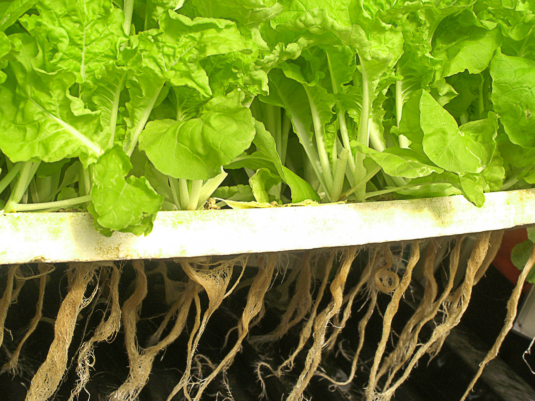 Setting Up An Indoor Hydroponic System For Home