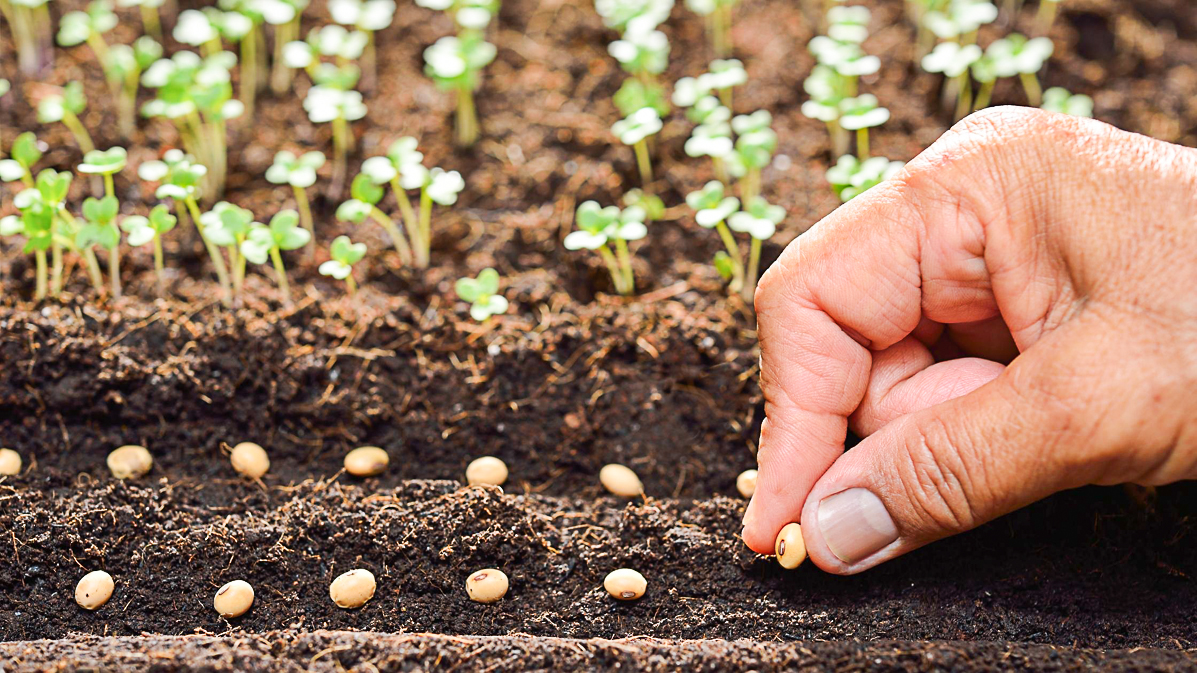The Best Ways For Growing Herbs From Seeds At Home