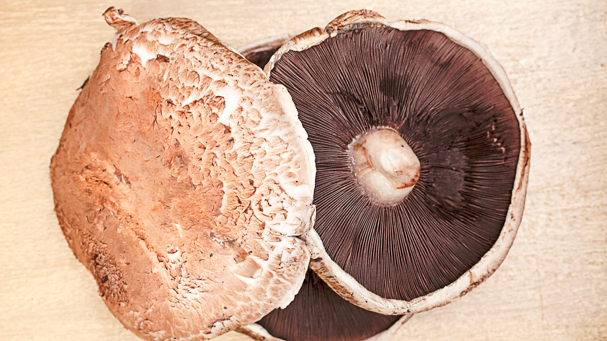 Top Tips For Growing Portobello Mushrooms At Home