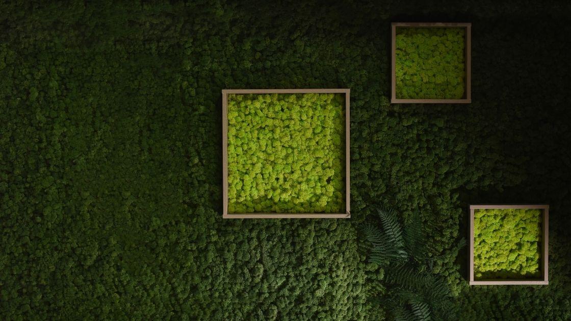 Installing Moss Art - cover