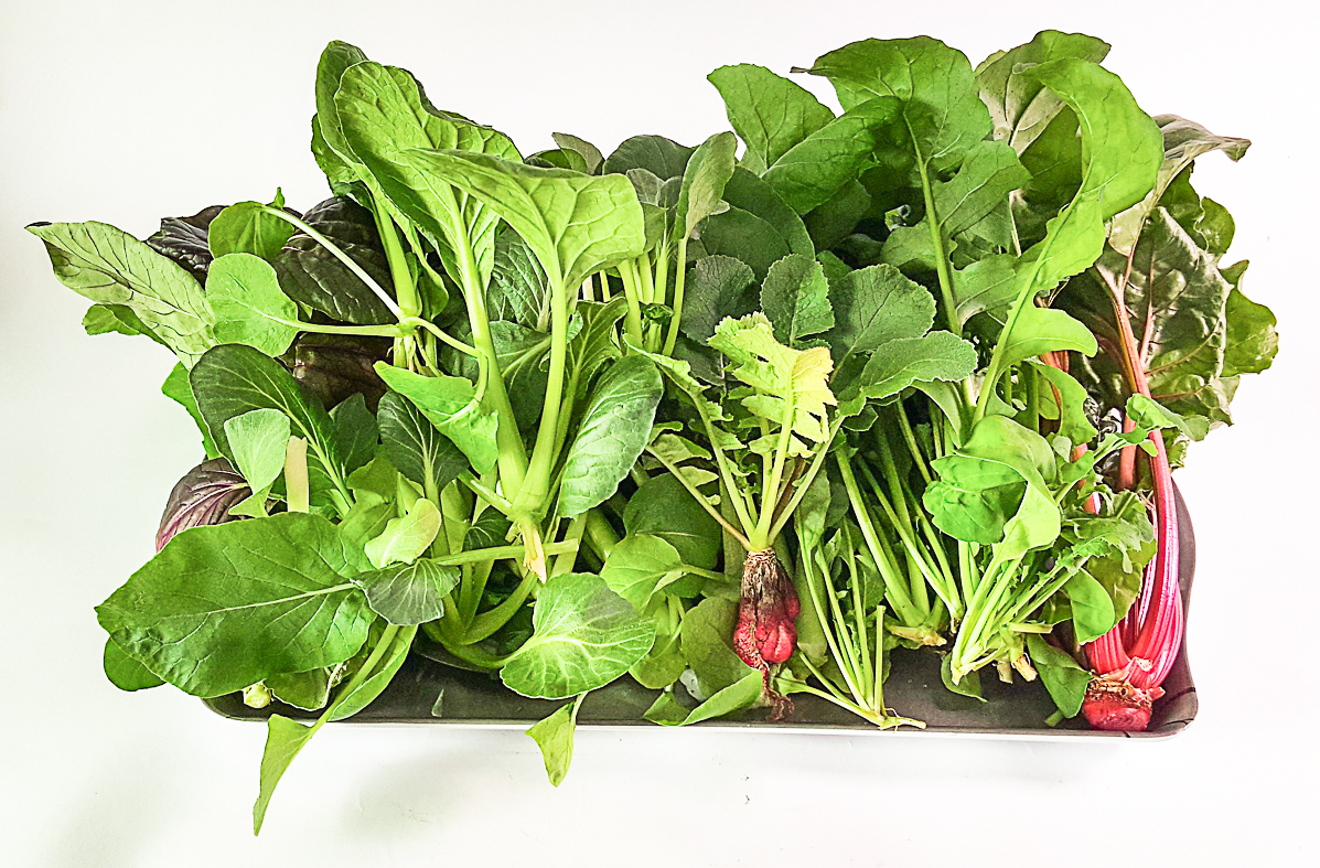 How To Setup A Small Hydroponic System At Home