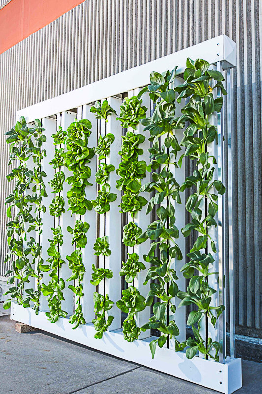 The Best Hydroponic Nutrients For Home Gardens