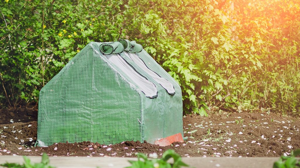 The Best Hobby Greenhouses For Home Gardeners