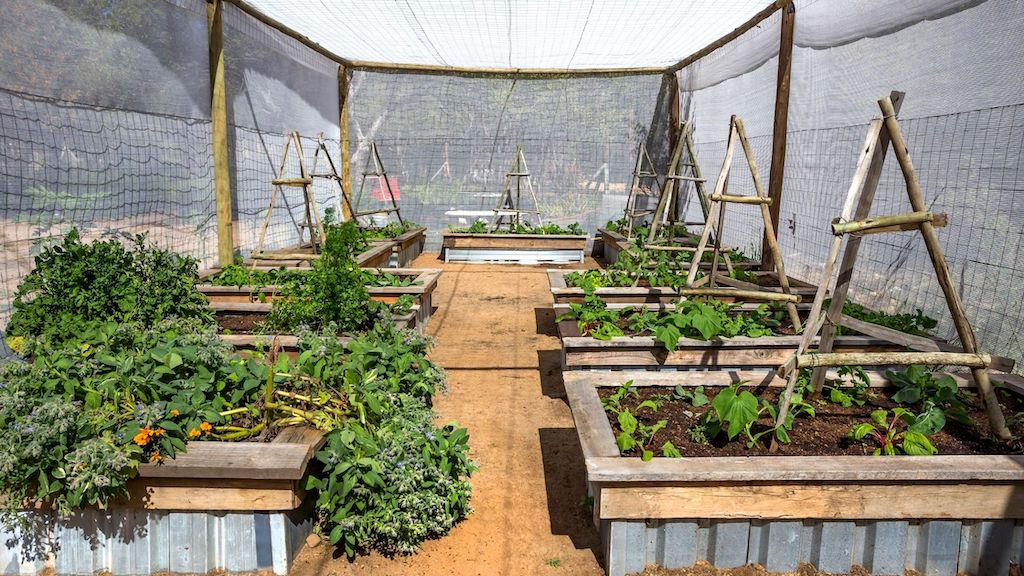 The Best Raised Bed Greenhouses For The Home Gardener