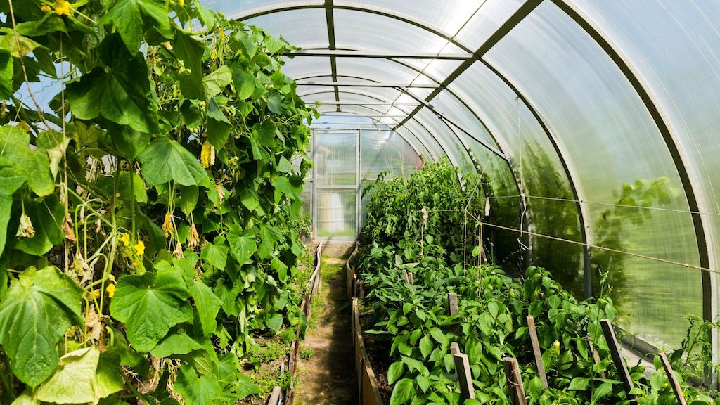 The Best Tunnel Greenhouses For Home Gardeners