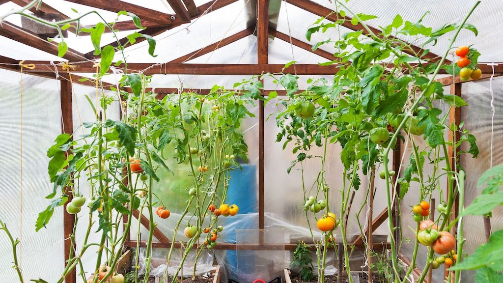 The Best Urban Greenhouses For Home Gardeners