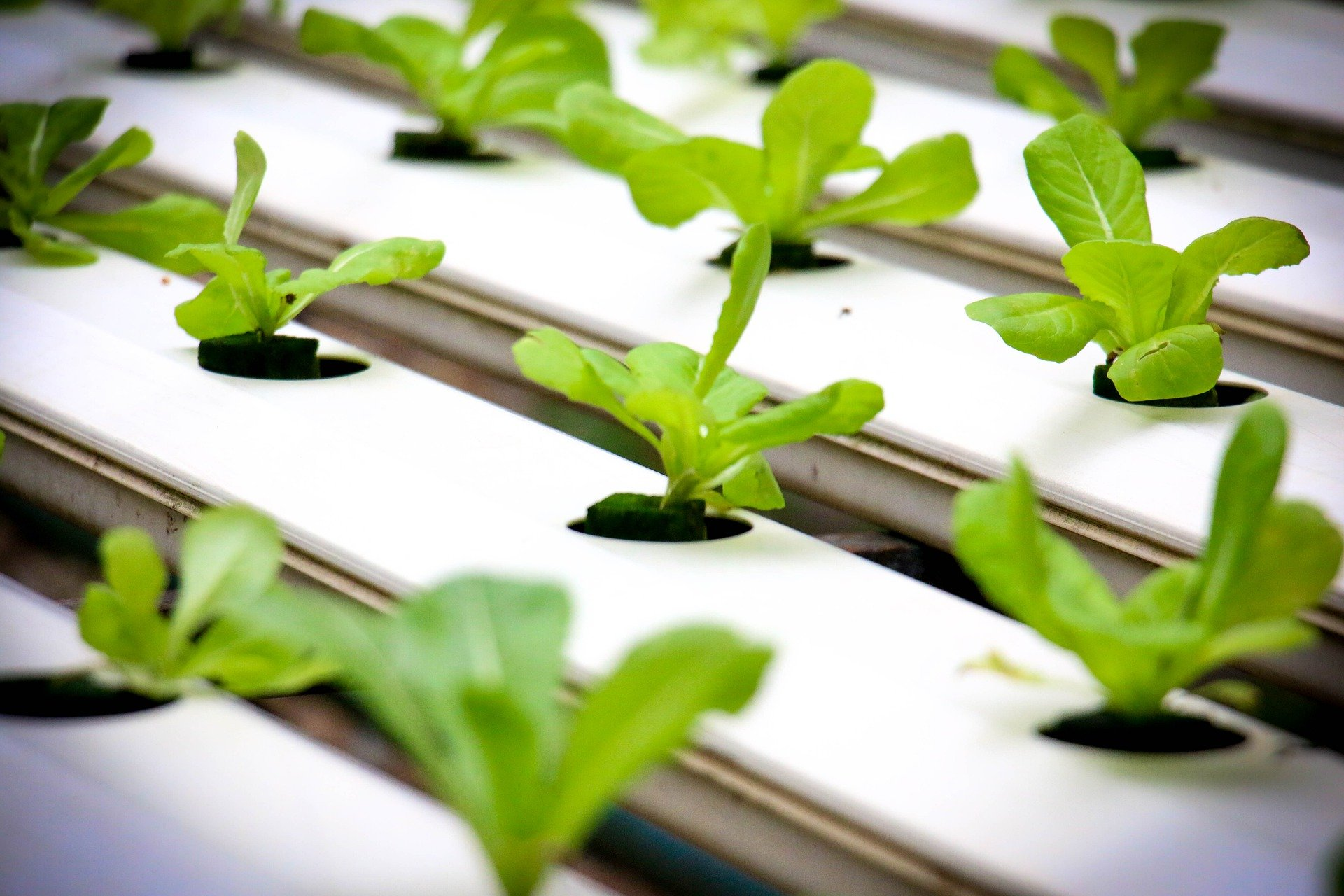 Best Tools You Need For A Hydroponic Greenhouse At Home